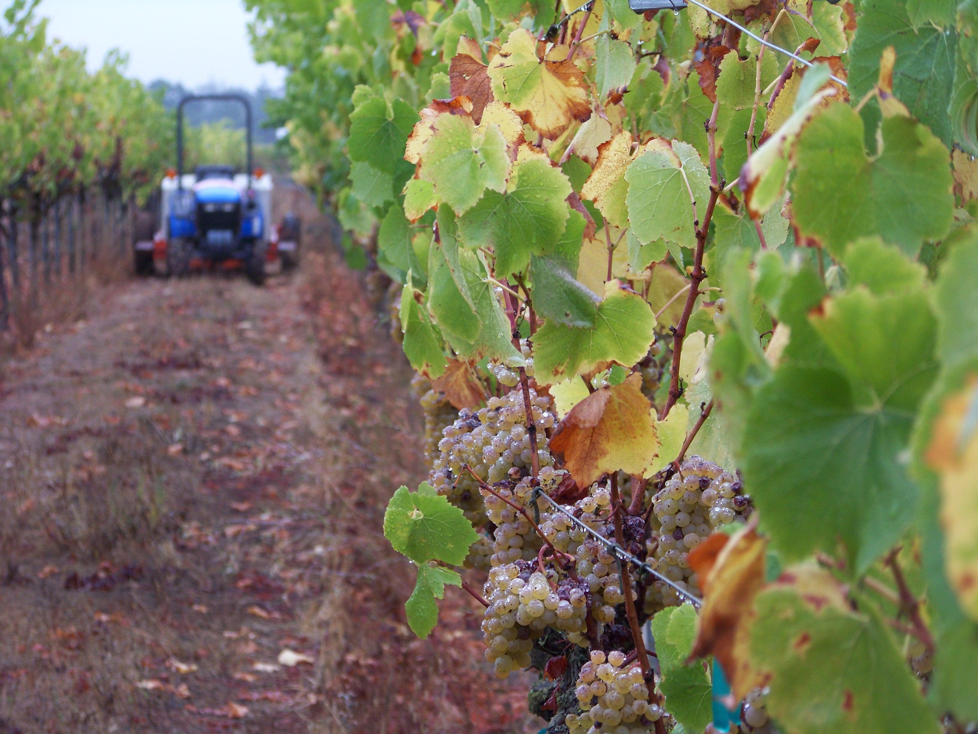 Tractor & Vines